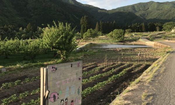 2019年06月の記事一覧|長野県須坂市の小さな農園 プチてんとう虫農園